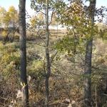 Отряду, который был сформирован для вырезки лишнего подлеска и кустарника была поставлена задача оставить все самые красивые одиночные или группы деревьев.