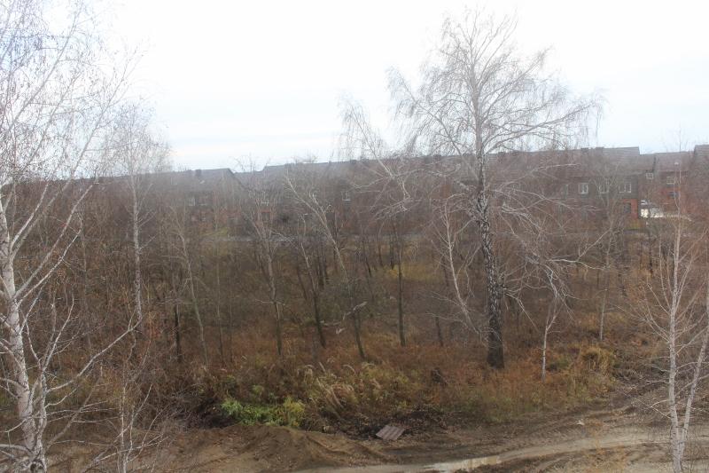 Вадима Туманова, 1а. Вид из окна мансардной квартиры на рощу.