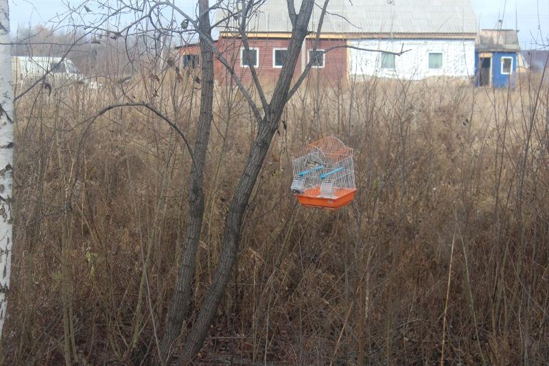 Кто-то подкармливает птичек в леске на В.Туманова, 1а.