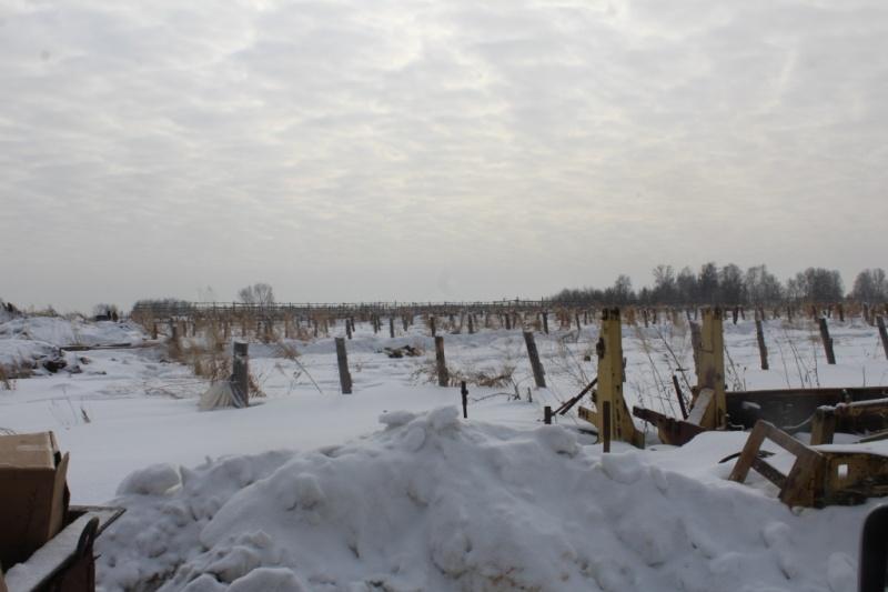 Начали демонтаж теплиц, местные разбирают их на дрова)