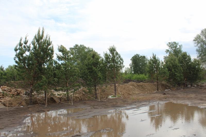Приехала первая партия деревьев для озеленения скверов на ПП 2.0. Как подсохнет, сразу установим на уже размеченные места.
